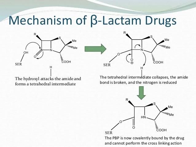 Action Mechanism Lactam Beta Antibiotics