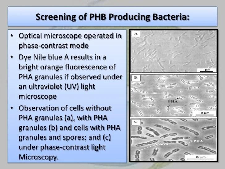 Biofertilizers Pdf
