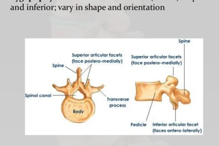interior inferior lumbar spine » Full HD MAPS Locations - Another ...