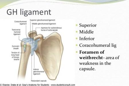 Interior Inferior Transverse Scapular Ligament Free Interior