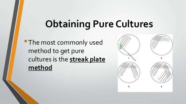 Radiant Streak Method Pure Cultures