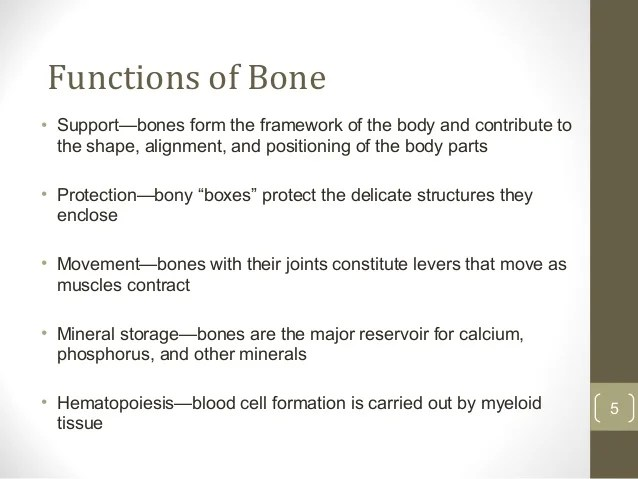 Not Bone Which Function