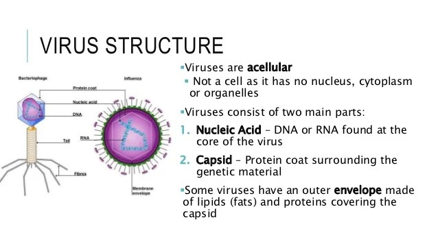 Are And Two Virus Are They Parts Main Virus What Where