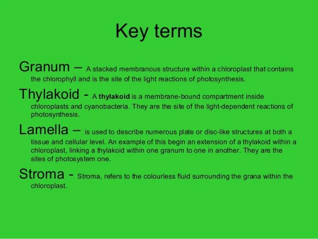 What Are Light Dependent Reactions