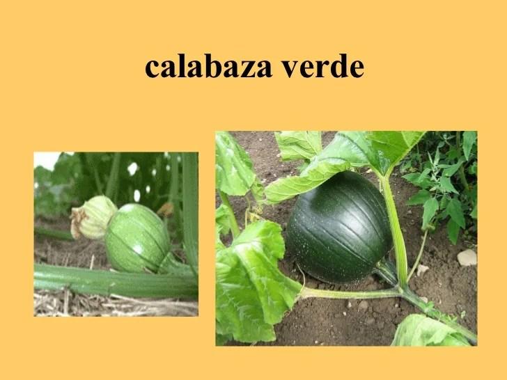 El Ciclo De La Calabaza