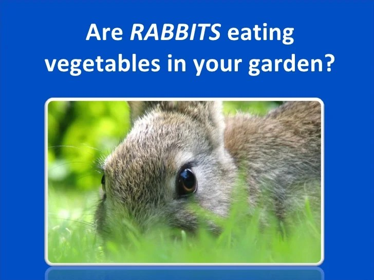 How Keep Rabbits Out Yard