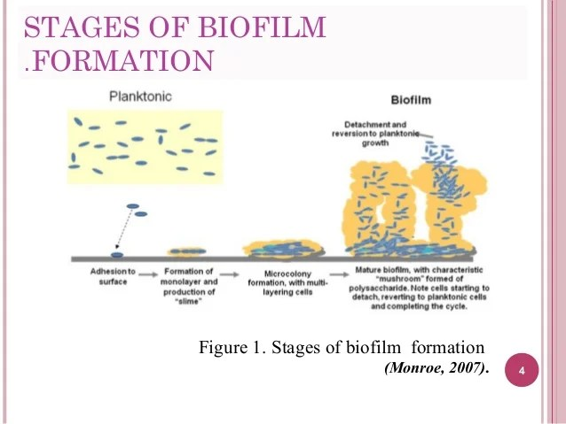 What Are Biofilms Made