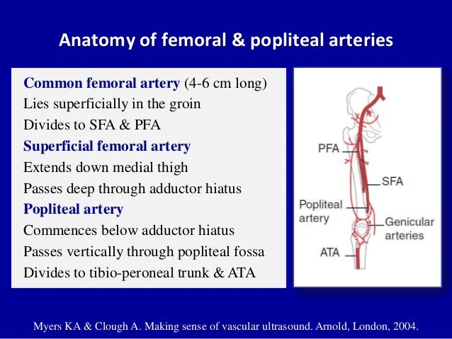 Femoral Femoral Artery And Vein