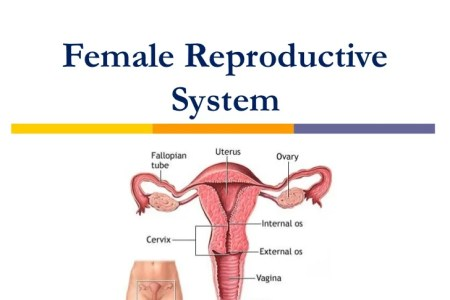 Woman with two reproductive organs 4k pictures 4k pictures full does woman have double reproductive organs or not youtube does woman have double reproductive organs or not people who have extra body parts body parts two ccuart Image collections