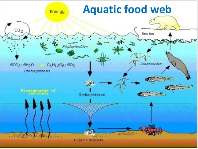 Aquatic Soil Pond Plants