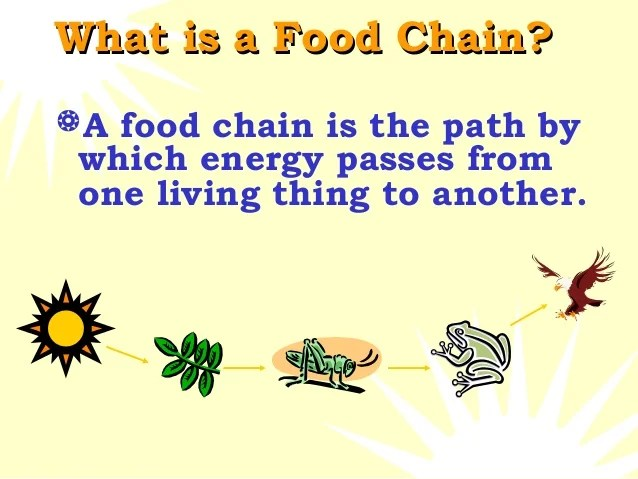 What Are 4 Food Chains