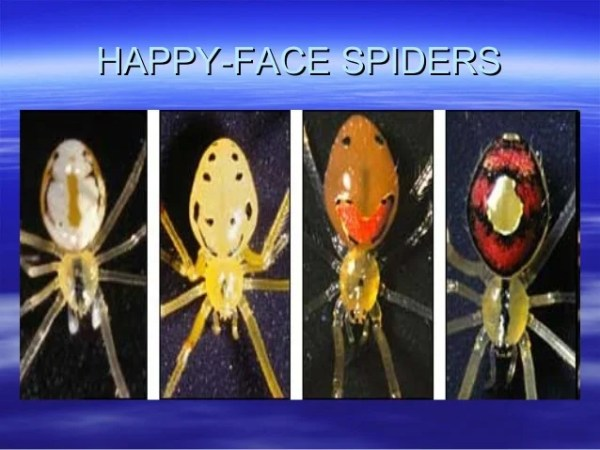 happy face spider  # 84