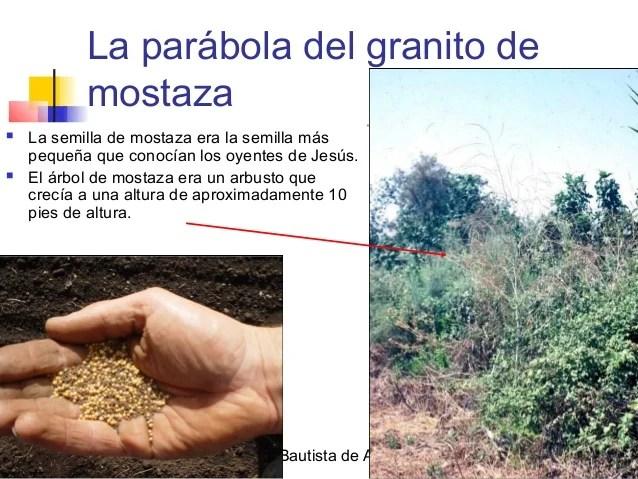 Arbol De Semilla De Mostaza