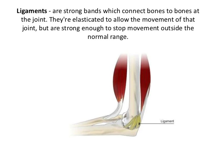Pivot Joint Ligaments And Cartilage