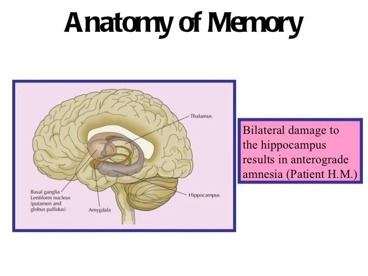 Prefrontal Cortex Damage