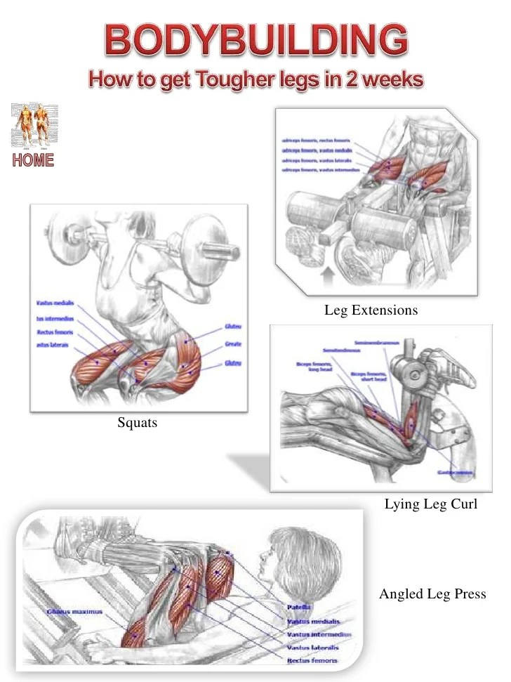 Muscle Diagram Website 2