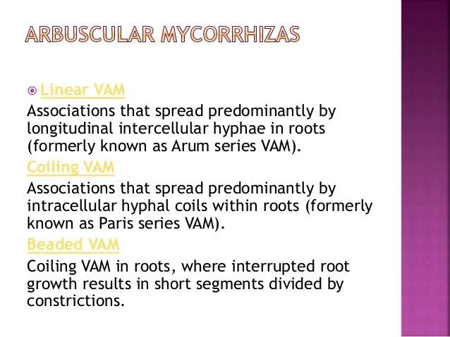 Mycorrhizal association in Plants