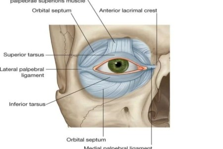 Interior Inferior Palpebral Sulcus Hd Images Wallpaper For