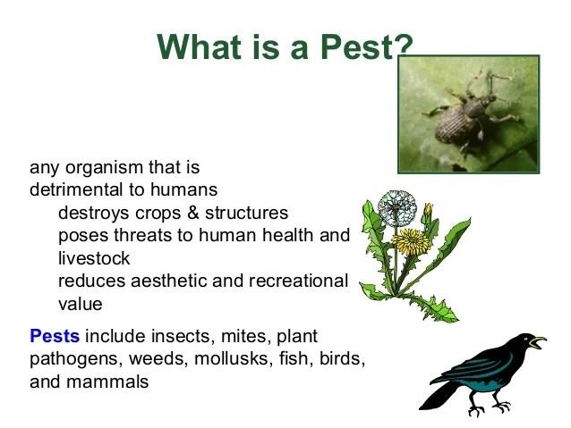 What Kills Mites Humans