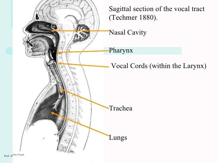 Nasal Valve Anatomy