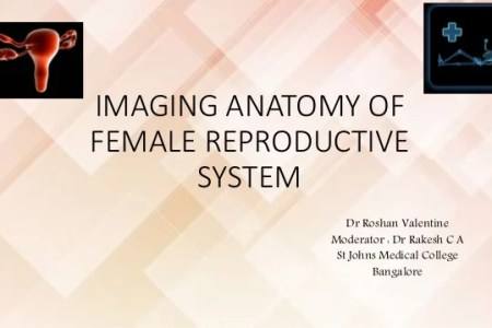 female genital anatomy ppt » Path Decorations Pictures | Full Path ...