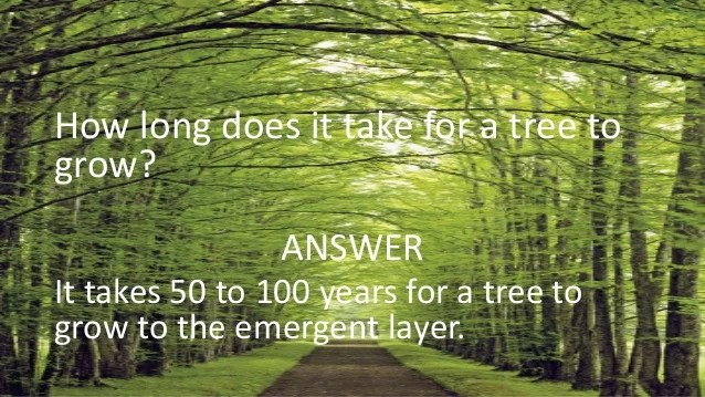Eat Plant Tree What Animals Dogwood