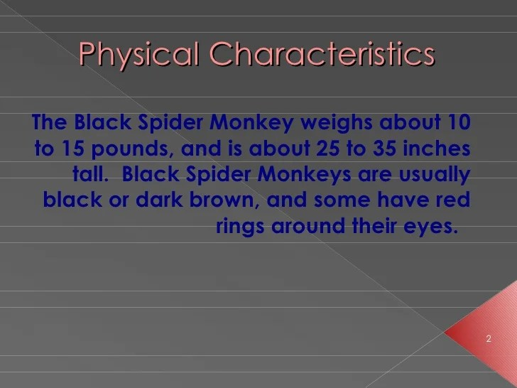 The spider monkey[1]
