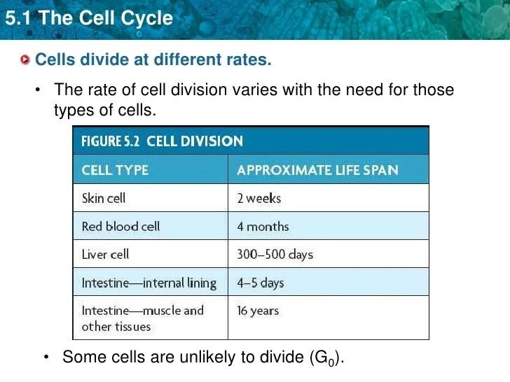 Prokaryotic Dna Replication