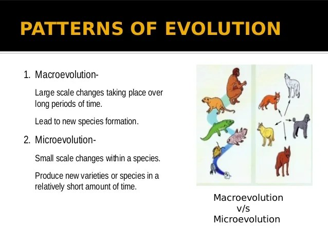 4 Evidences Evolution