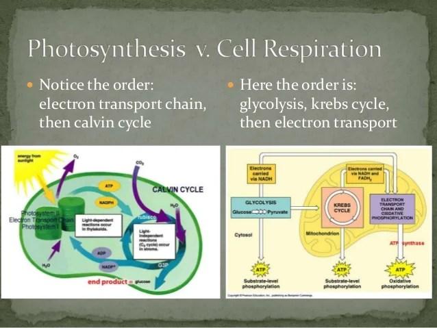 Cellular Respiration Vs Photosynthesis Venn Diagram
