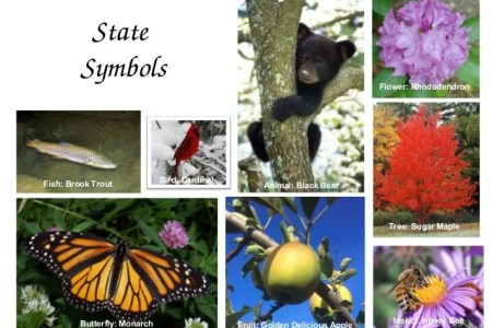 Best Wild Flowers West Virginia State Bird And Flower Wild Flowers