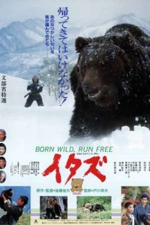 The Forest of the Little Bear (1987)