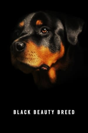 Black Beauty Breed (2014)