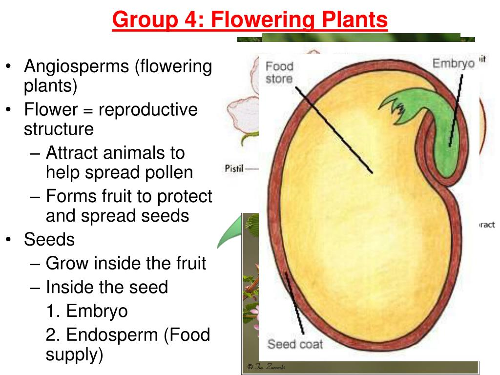 embryo protection in plants - 960×720