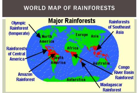 Beste dekoration ideengalerie map of all the rainforest gumiabroncs Image collections