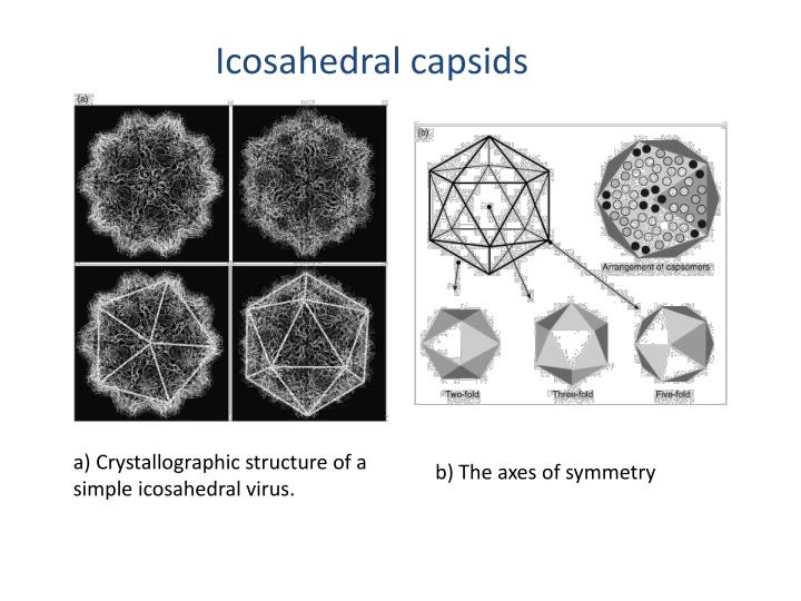 Icosahedral Virus Structure