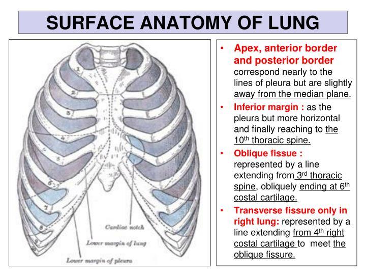 Oblique Plane Anatomy Images Human Body Anatomy