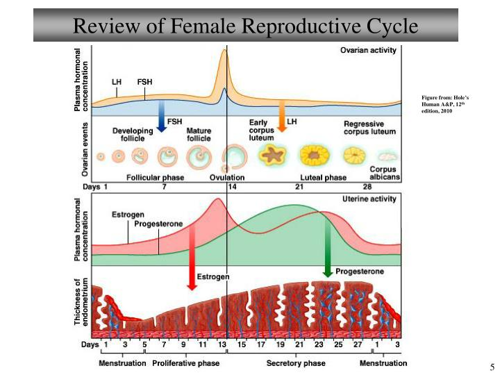 PPT - Chapter 25 Reproductive System – Female II Lecture ...