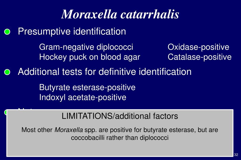 Moraxella Catarrhalis Agar