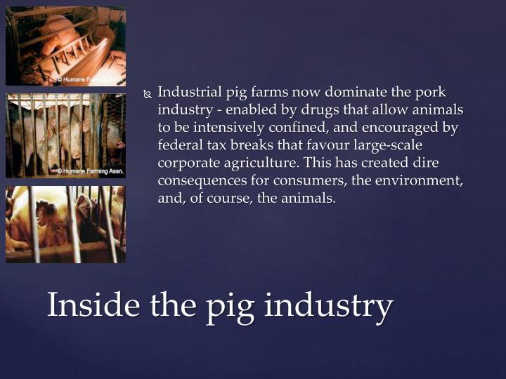 Inhumane Slaughterhouses