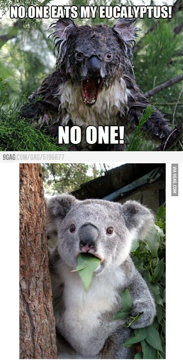 My first thought to angry koala. - 9GAG