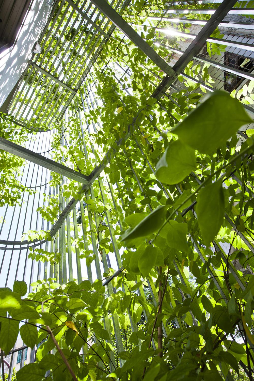 Gallery Of Green Renovation Vtn Architects 19