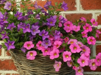 Violet flower free stock photos download  10 946 Free stock photos     flowers wall blue