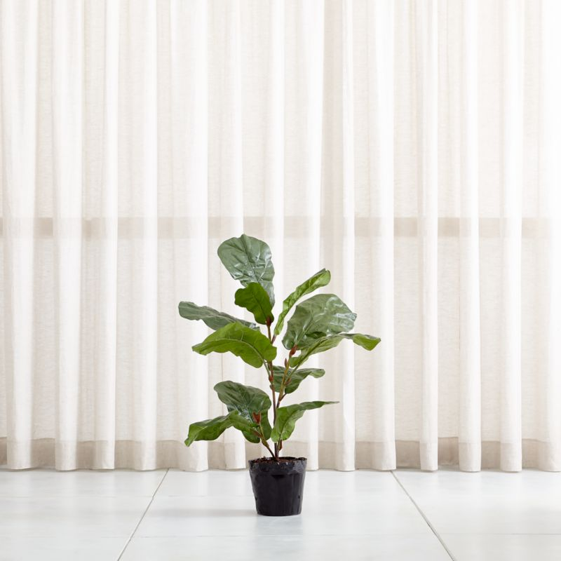 Faux 3 5 Fiddle Leaf Fig Tree Reviews Crate And Barrel
