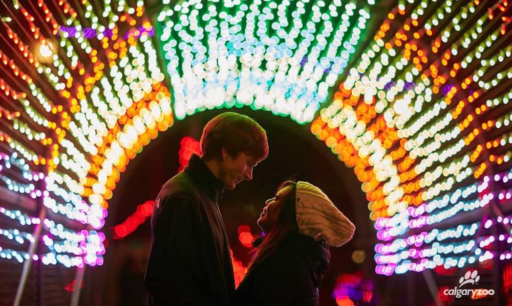 Calgary Zoo Lights Reviews