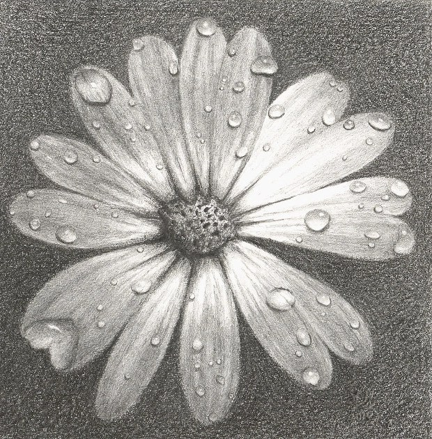 Daisy Flower Drawings Simple