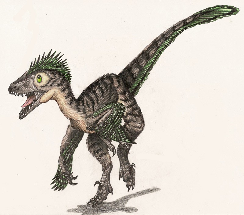 Deinonychus Pictures & Facts - The Dinosaur Database