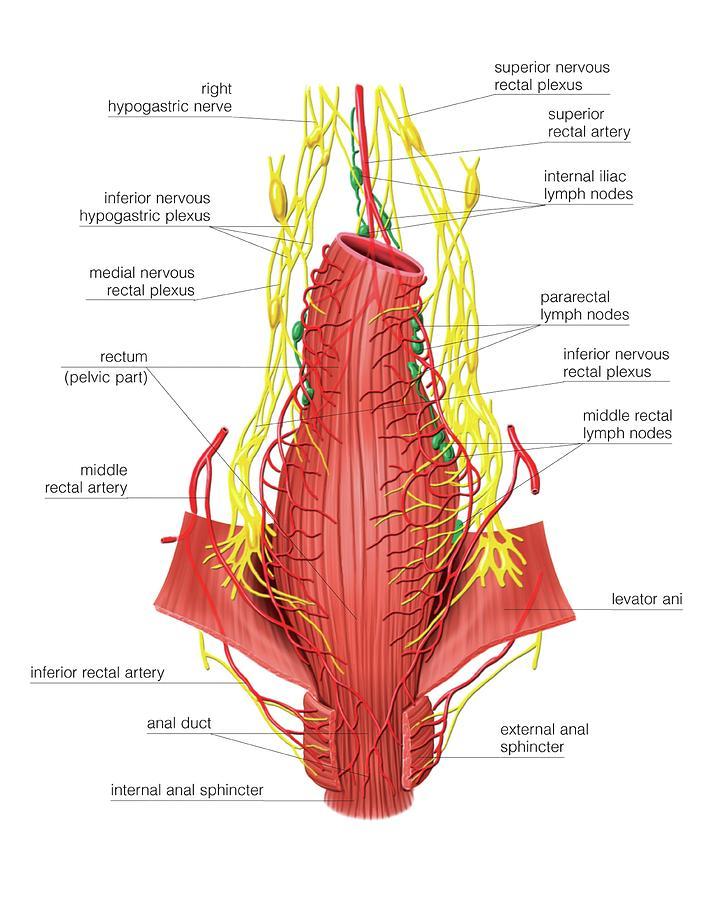 Interior Internal Melanoma In Rectum Full Hd Maps Locations