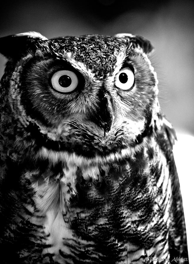 Owl Black And Wight