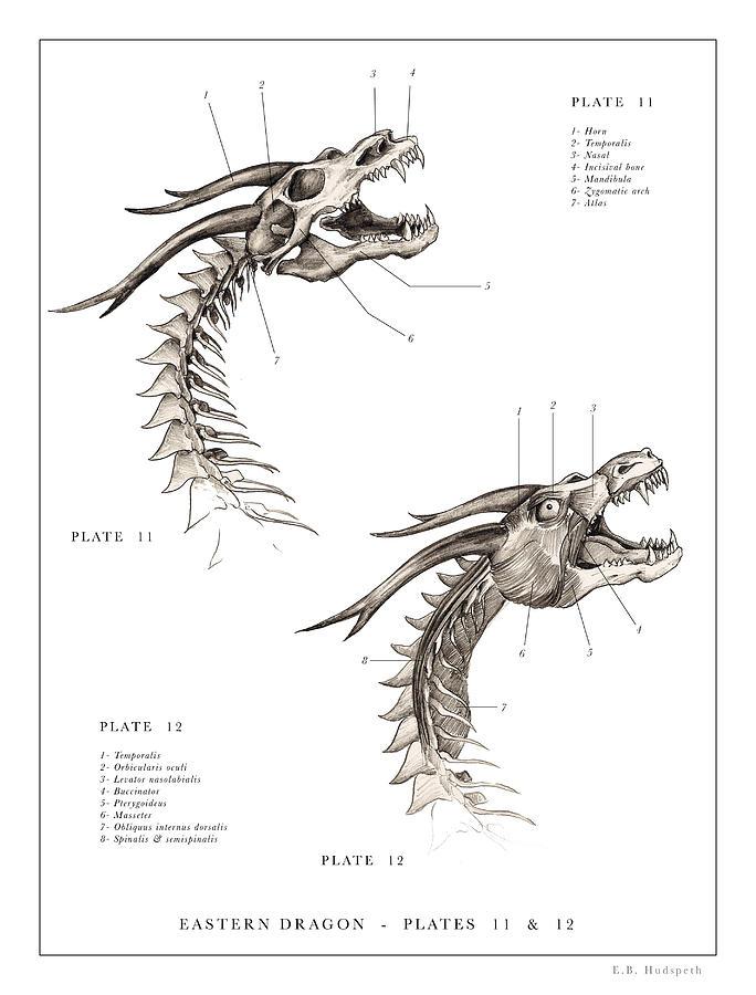 Eastern Dragon Print 11, 12. Drawing by EB Hudspeth